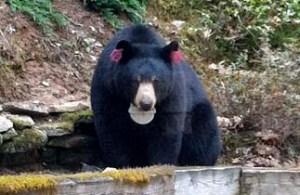 bear2 2014_edited-1
