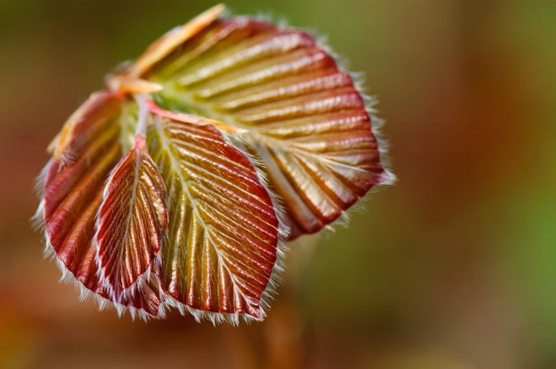 New leaf in spring